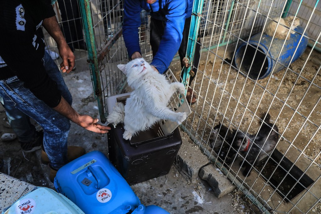 A cat is loaded into a cage for transportation (Mohammed Alaloul)