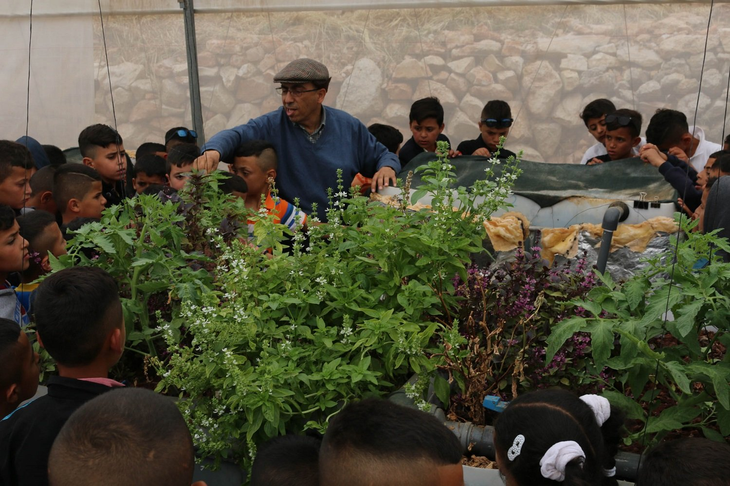 """Dr Qumsiyeh shows a tour group of local children vegetables and herbs growing in an aquaponics system in the museum's greenhouse"
