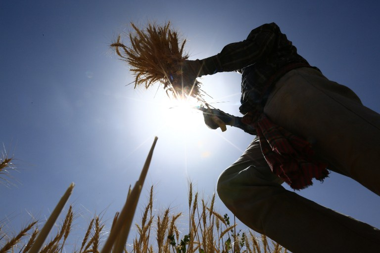 Saudi agricultural investment abroad - land grab or benign strategy?