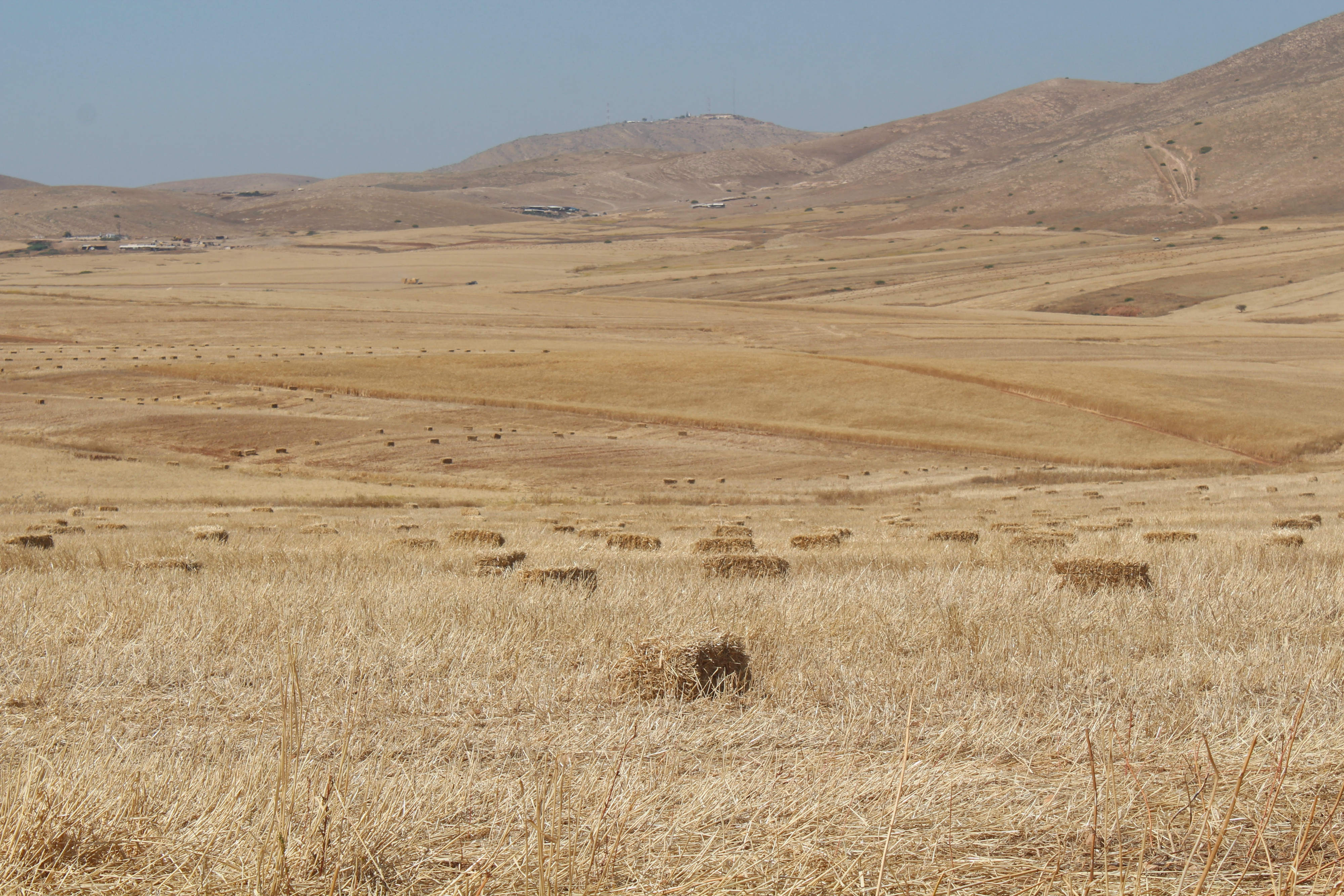 The fields in the Jordan Valley are at risk of being torched by Israeli military exercise (MEE/Shatha Hammad)
