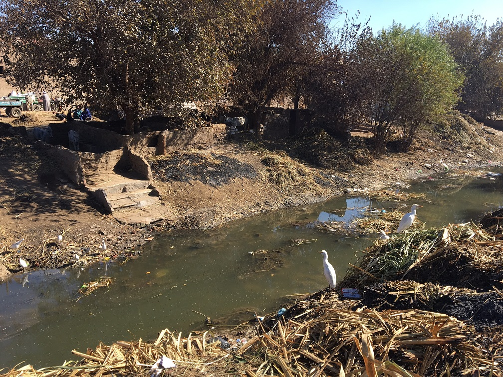 A canal choked with sewage and garbage is pictured in Minya, Egypt (MEE/Mohamed Mahmoud)