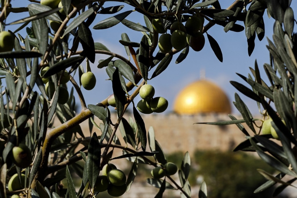 Olive trees stand in front of Jerusalem's Old City in October 2017 (AFP)