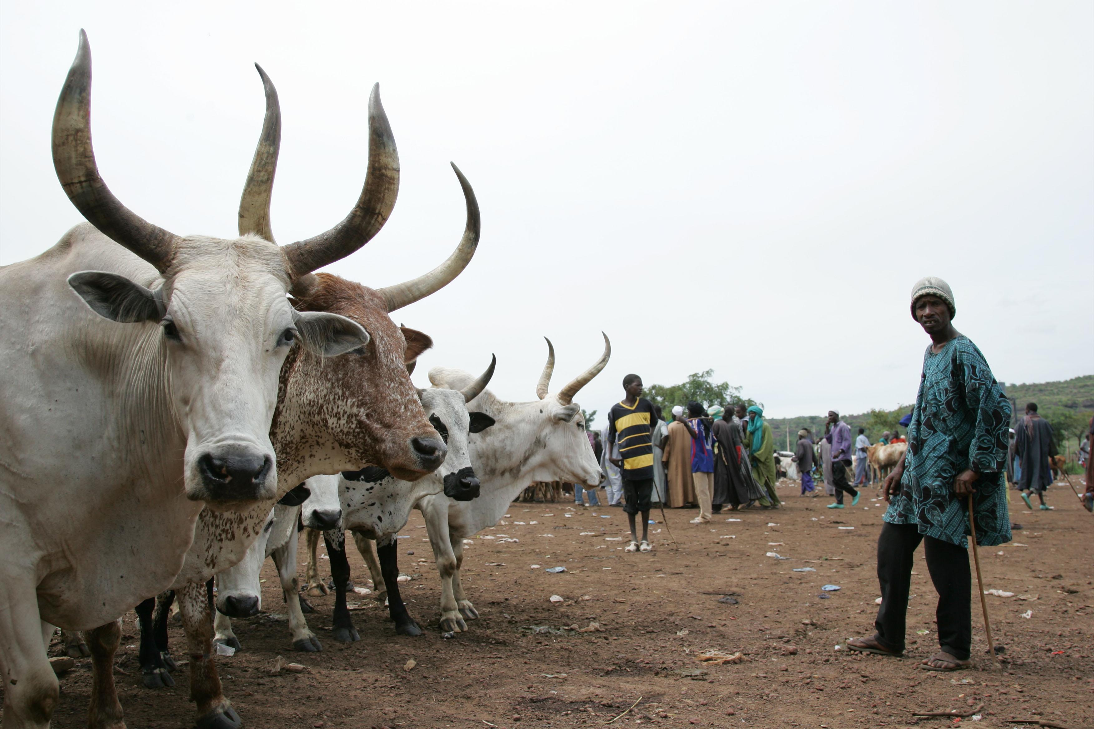 Fulani herders