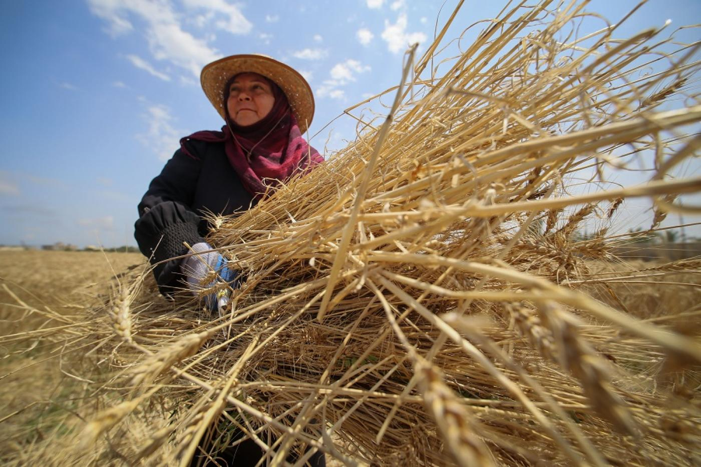 Harvest under fire: The plight of Gaza's female farmers
