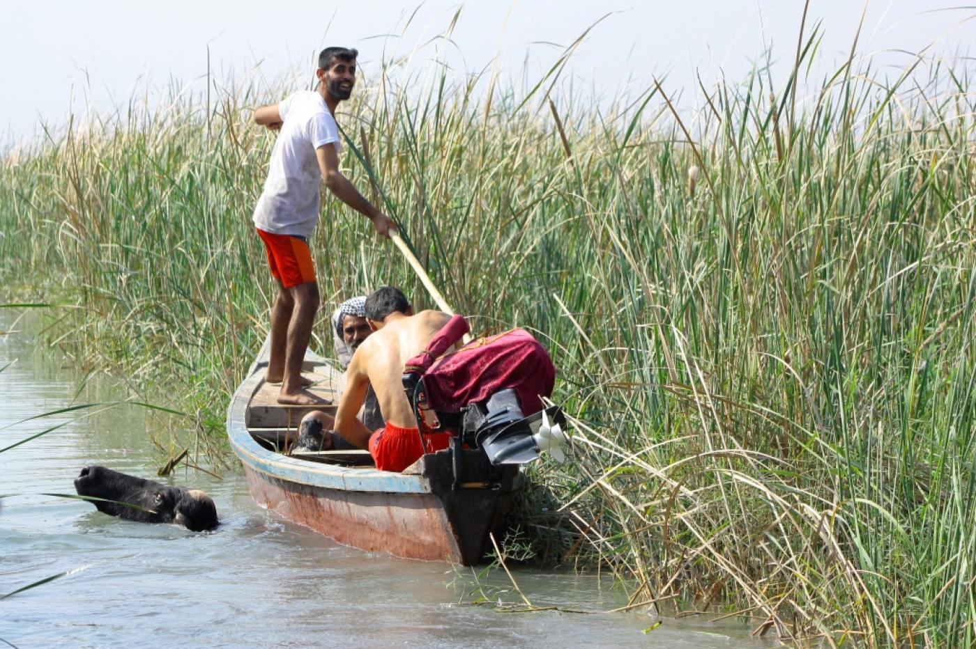 In 2016, Iraq's marshes were listed as a World Heritage Site by UNESCO (Nature Iraq)