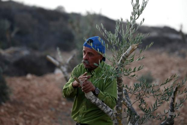 Palestinian farmers caught between Israeli rock and PA hard place