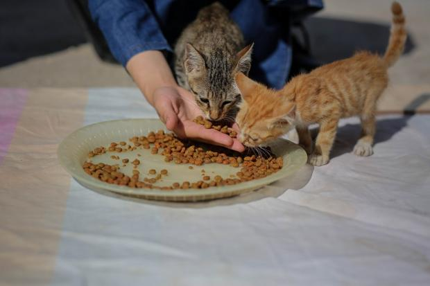 Mariam al-Bar prepare a foods for her cats in her family house, in al-Zaitoon neighborhood east of Gaza City.