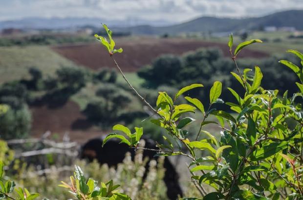 Bio Morocco Permaculture Movement Grows Despite Pressure