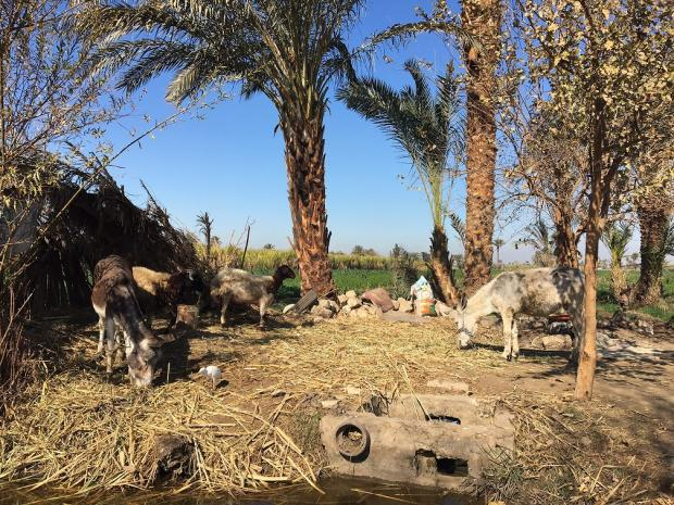 Egyptian Farmers Fear Drought And Dam Without The Nile There Is